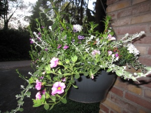 hanging basket WZA
