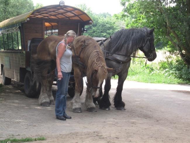 huifkar met paarden kl