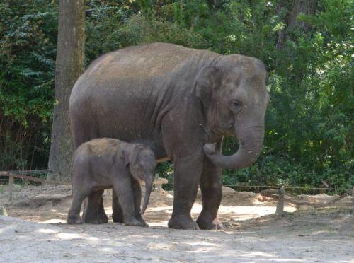 ma olifant en kind