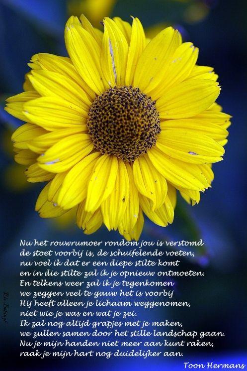 geel-bloemetje 21 aug