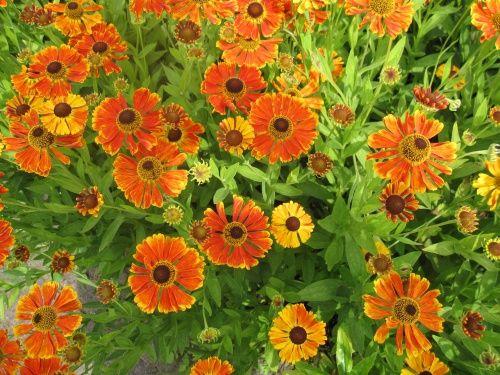 oranje bloem 15 okt